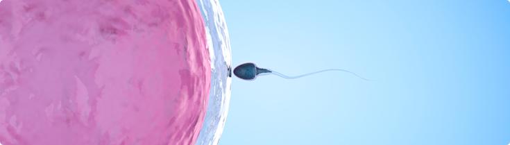 injeção intracitoplasmática de espermatozoides