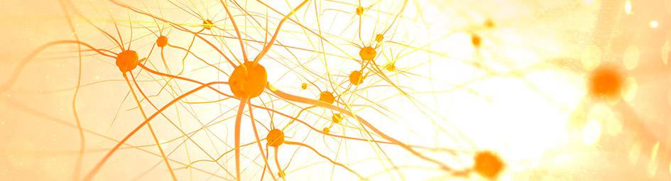 Hormônio Antimulleriano (AMH) e a Menopausa