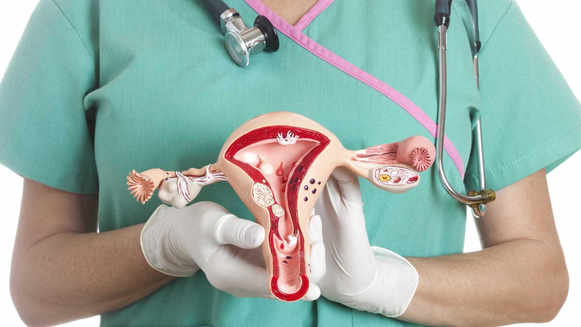 médico segurando modelo de aparelho reprodutor para explicar a gravidez nas trompas.
