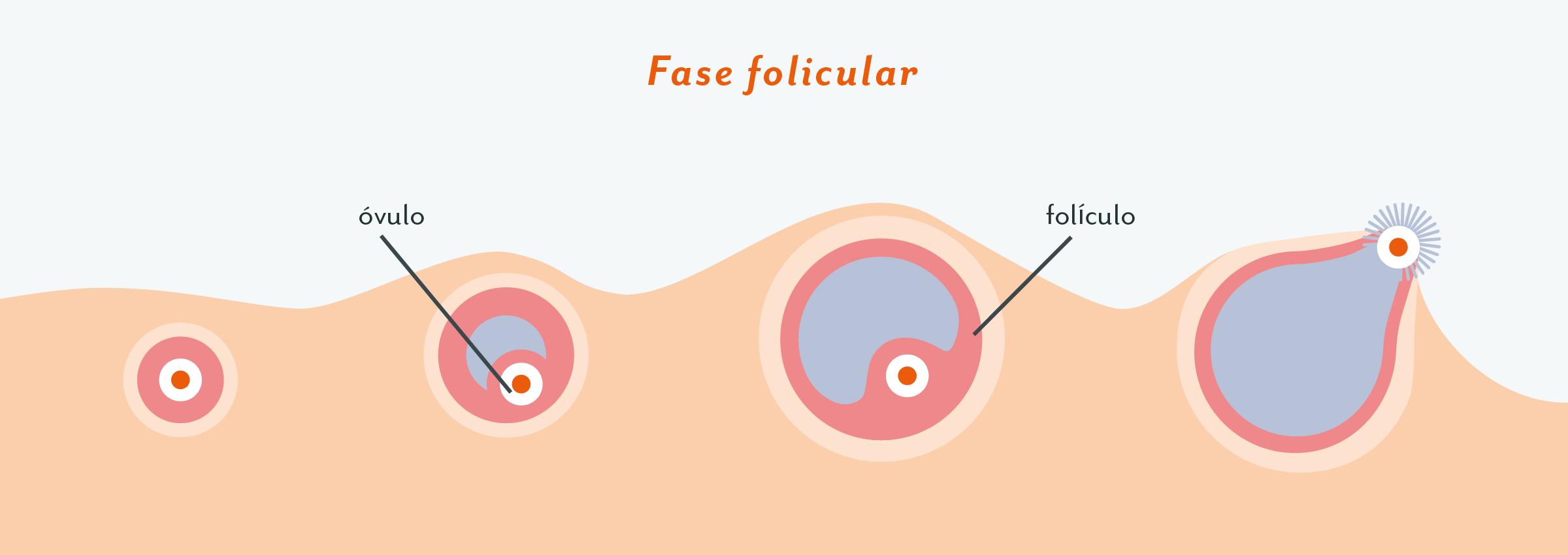 Para entender a dor na ovulação é preciso observar o período menstrual.