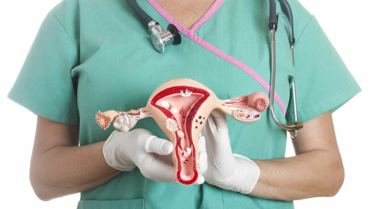 médico segurando um modelo de aparelho reprodutor feminino nas mãos