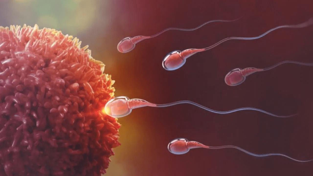 espermatozóide fecundando um óvulo