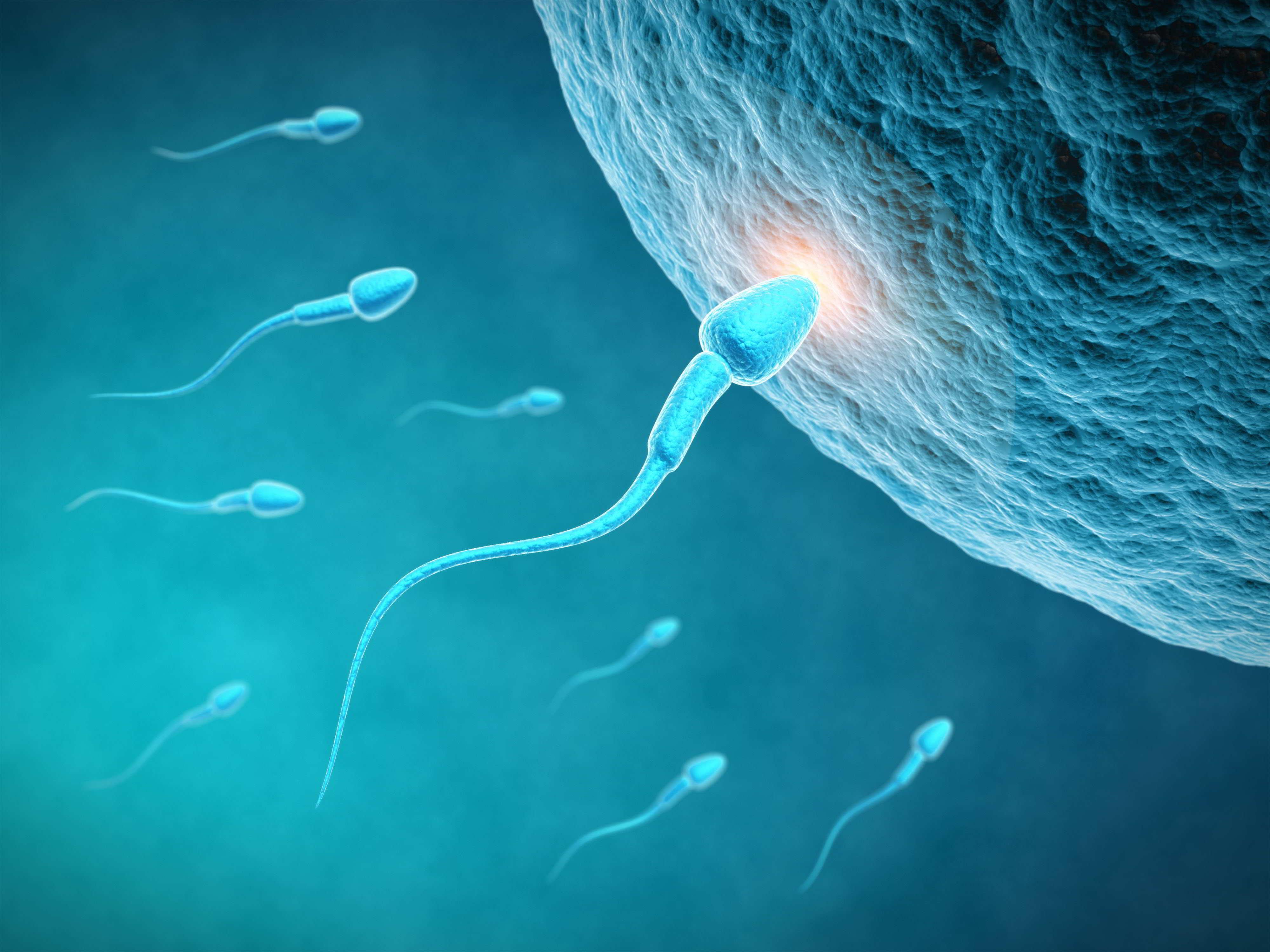 esquema mostrando espermatozóides atingindo um óvulo